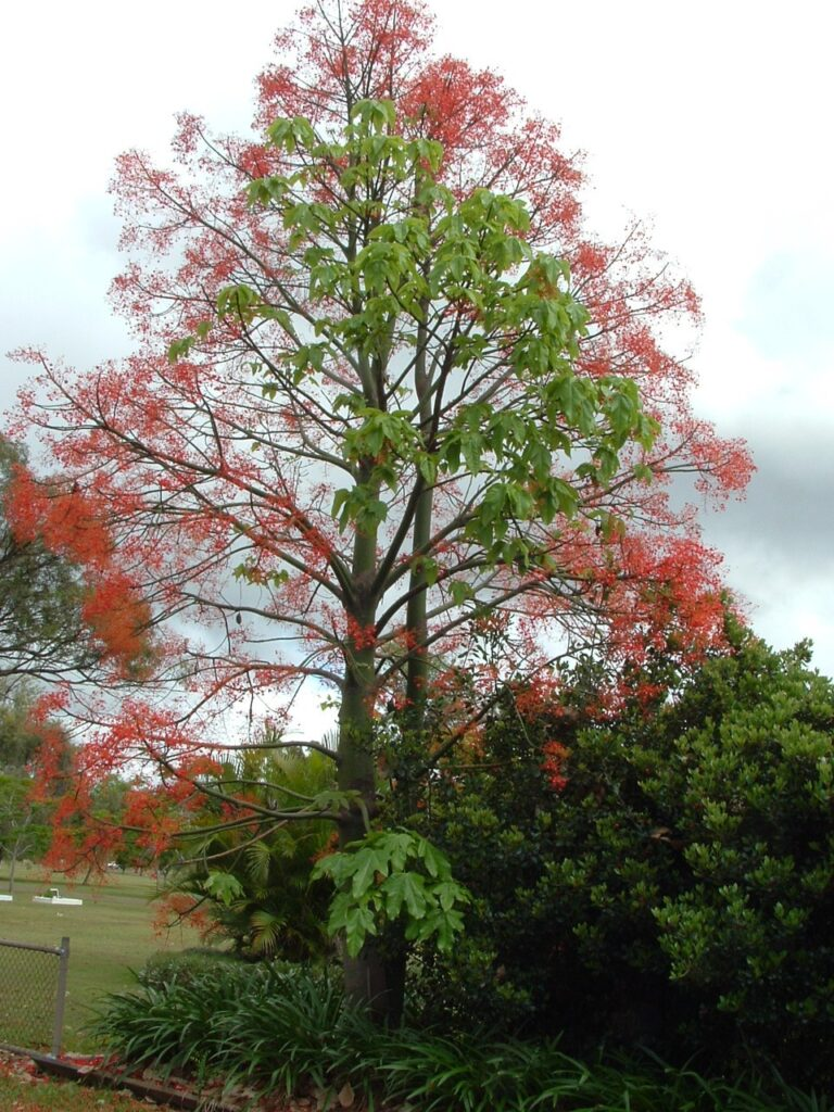 This image has an empty alt attribute; its file name is flame-tree-1flowering-image-768x1024.jpg
