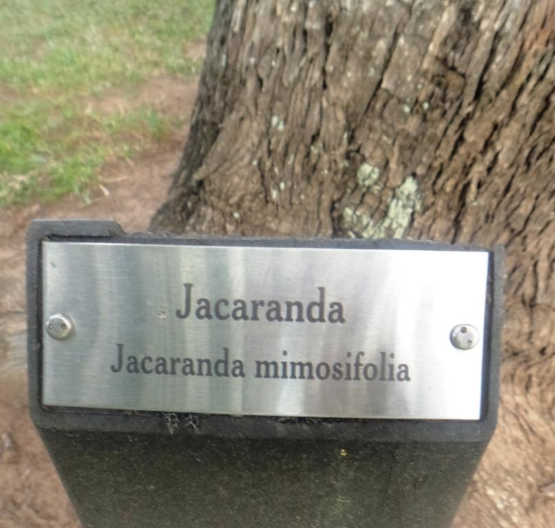 This image has an empty alt attribute; its file name is jacaranda-tree-nameplate-image-www.sunblestproducts.com_.jpg