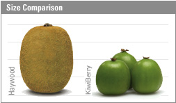 This image has an empty alt attribute; its file name is kiwiberry-fruit-images-www.sunblestproducts.com-2.jpg