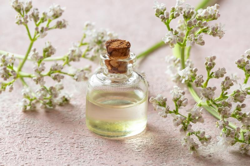 This image has an empty alt attribute; its file name is bottle-essential-oil-fresh-blooming-valerian-twigs-bright-background-154106739.jpg